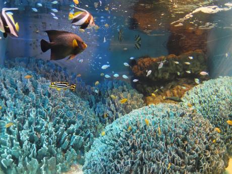 サンシャイン水族館10