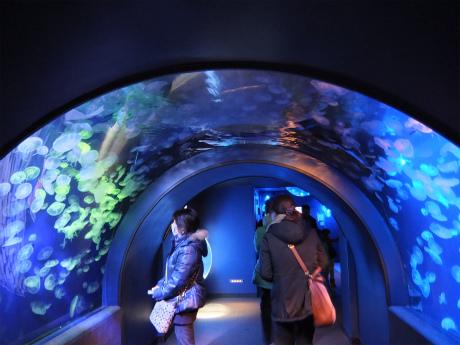 サンシャイン水族館5
