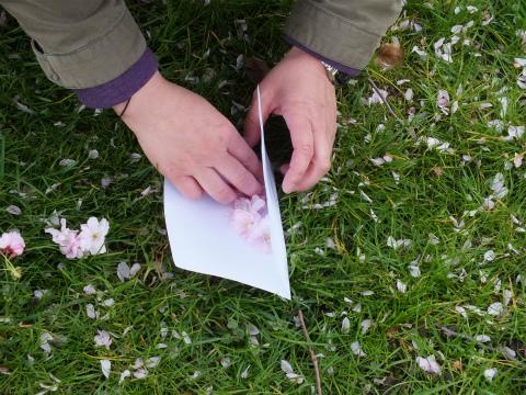 押し花採集3