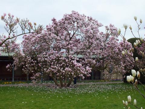 ヴィルヘルマの春2