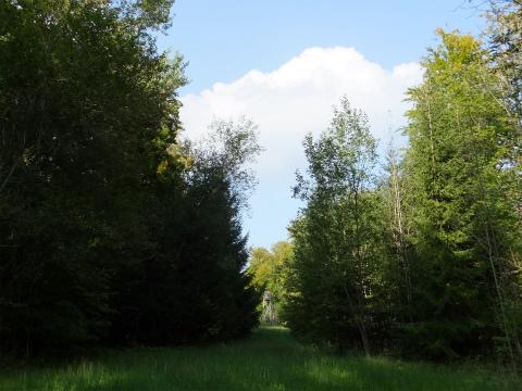 帰国後の森1