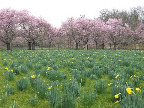 桜の庭12