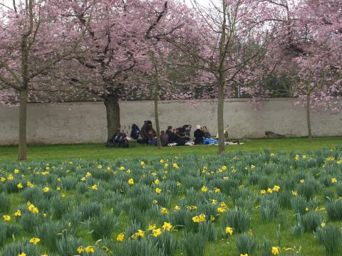 桜の庭13