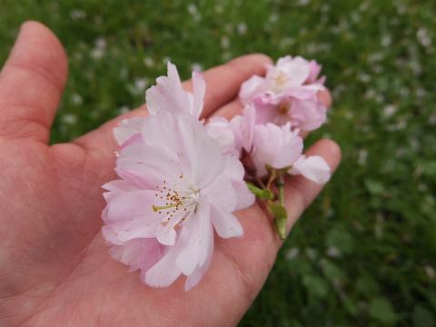 押し花採集2