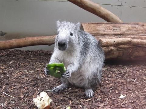小型哺乳類1