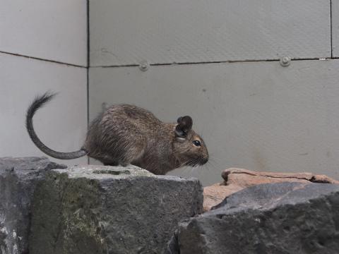 小型哺乳類2