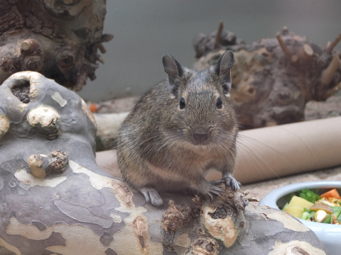 小型哺乳類3