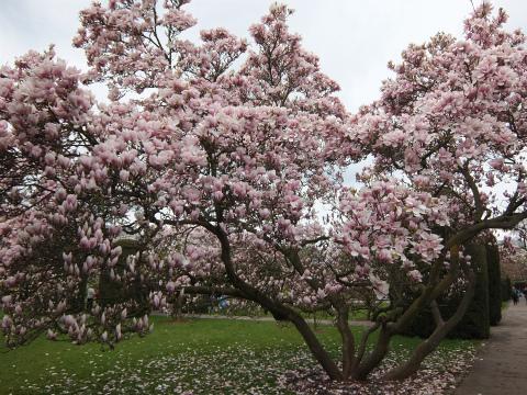 ヴィルヘルマの春3