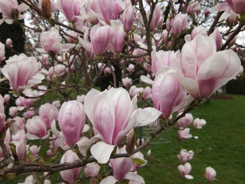 ヴィルヘルマの春5