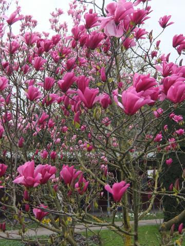 ヴィルヘルマの春6