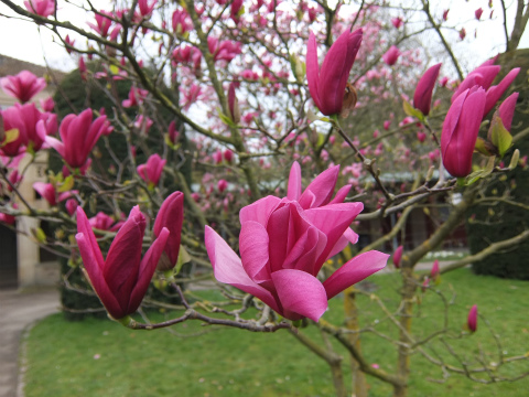 ヴィルヘルマの春7