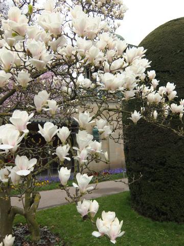 ヴィルヘルマの春8