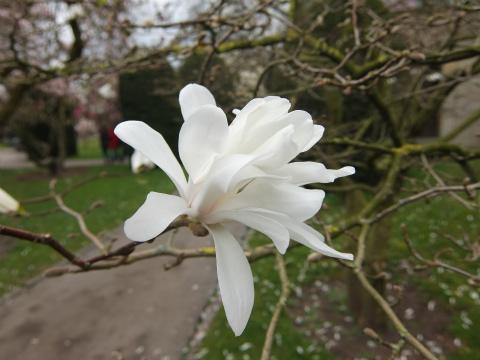 ヴィルヘルマの春11