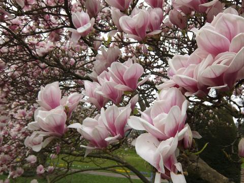 ヴィルヘルマの春14