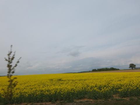 菜の花畑の風景2