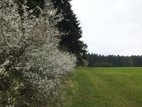 Heiligenbronn7