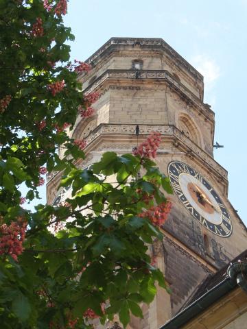 シュティフト教会とマロニエ