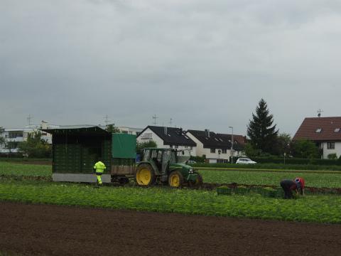 ボウボウの農作業1