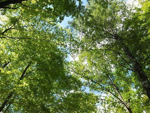 木漏れ日11