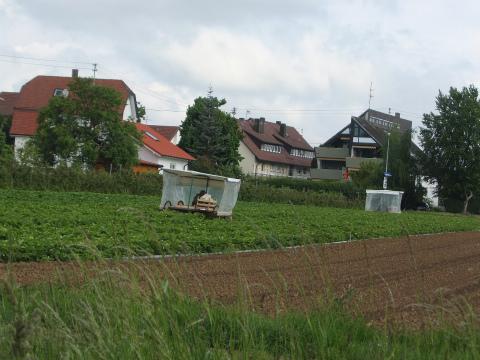 ボウボウの農作業3