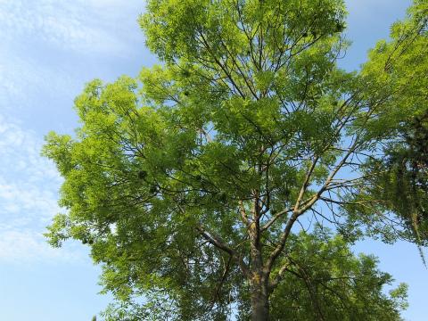 ボウボウの謎の木1