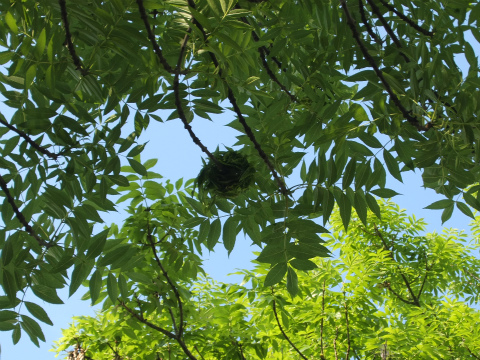 ボウボウの謎の木4
