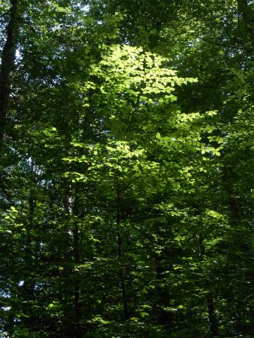 木漏れ日16