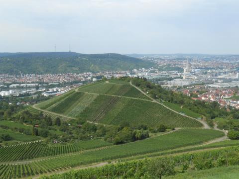 Rotenberg2