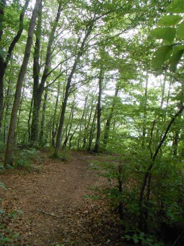 Aufhausenの森