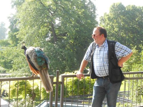 孔雀とペタさん