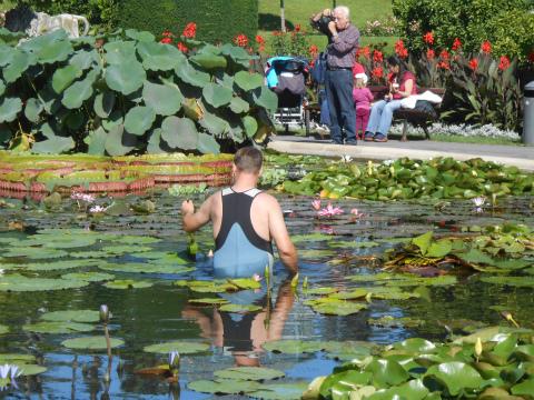 Wilhelmaの池の掃除1