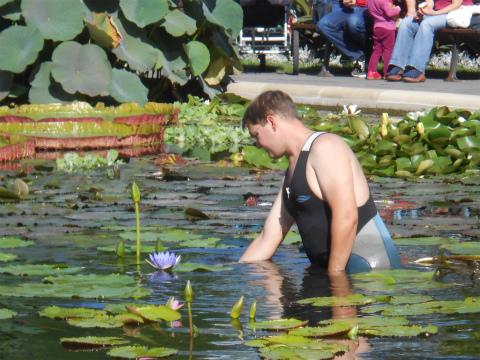 Wilhelmaの池の掃除2