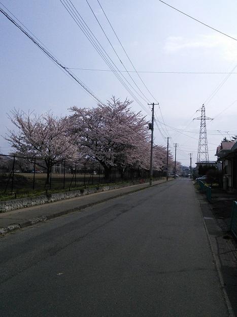 黒沢尻北小の桜
