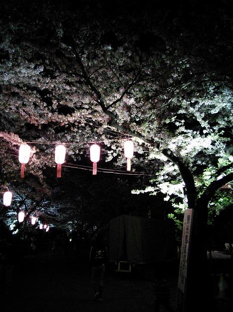 展勝地夜桜1