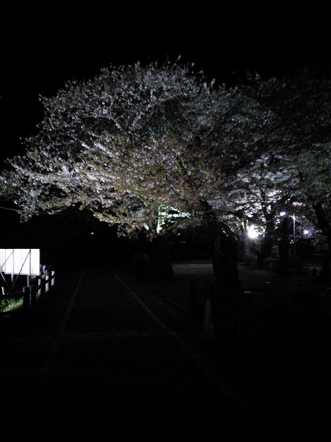 展勝地夜桜2