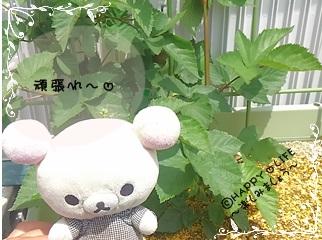 ちこちゃんのブラックベリー観察日記★3★みょ~ん-5