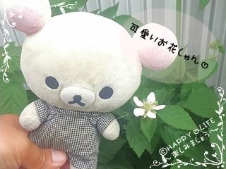 ちこちゃんのブラックベリー観察日記★4★咲いたよ-3