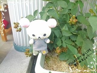 ちこちゃんのブラックベリー観察日記★7★かくれんぼ-1