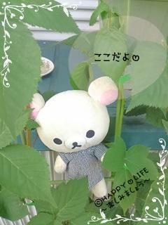 ちこちゃんのブラックベリー観察日記★7★かくれんぼ-4