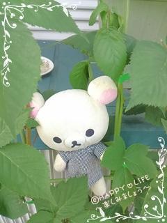 ちこちゃんのブラックベリー観察日記★8★収穫はいつかな?-1