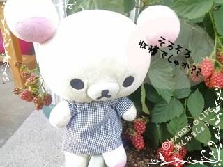 ちこちゃんのブラックベリー観察日記★8★収穫はいつかな?-3