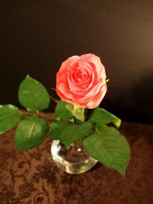 薔薇TOP143