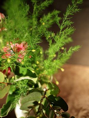 ピンクスタブロッコリの花144