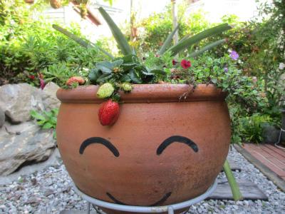 ニコニコイチゴ