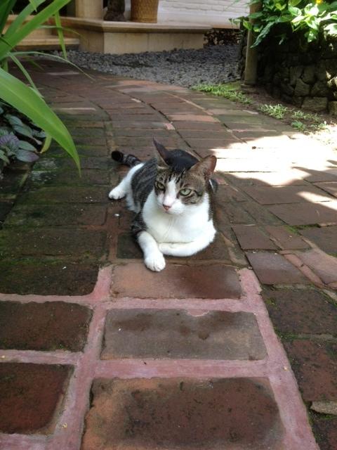 Bali17-09Feb14.jpg