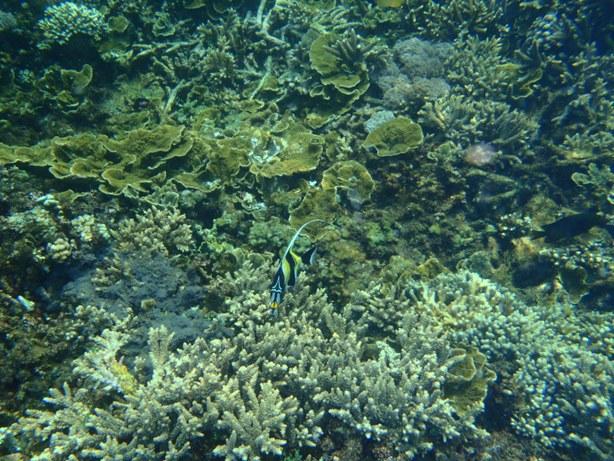 Bali90-13Feb14.jpg