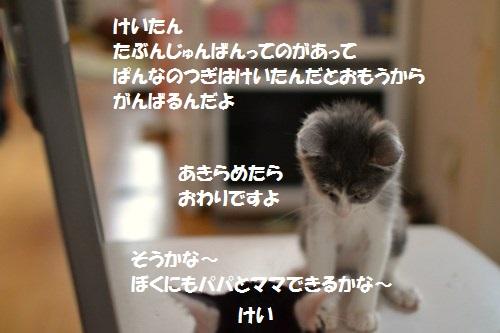 7_20140703204413149.jpg