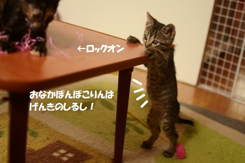 DSC_0304.jpg