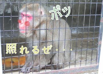 s-nettai-621140621-saru-CIMG9773