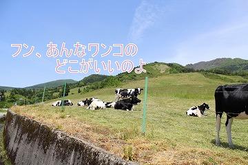s-rokurosi140728-IMG_2697